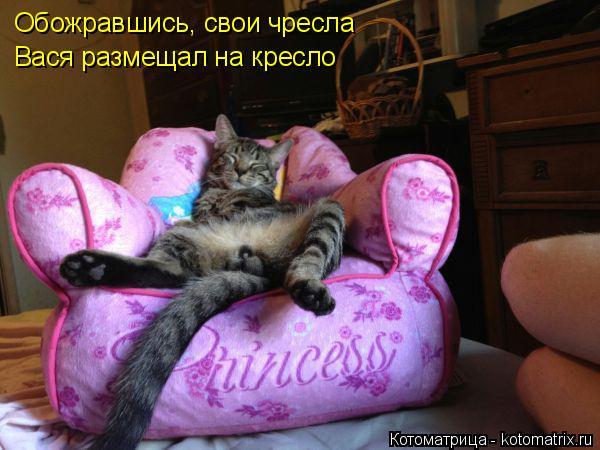 Котоматрица: Обожравшись, свои чресла  Вася размещал на кресло