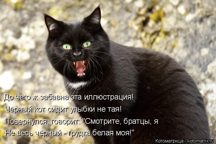 """Котоматрица: До чего ж забавна эта иллюстрация! Чёрный кот сидит улыбки не тая! Повернулся, говорит: """"Смотрите, братцы, я Не весь чёрный - грудка белая моя!"""""""