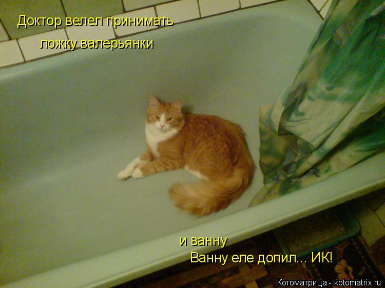 Котоматрица: Доктор велел принимать ложку валерьянки и ванну Ванну еле допил... ИК!