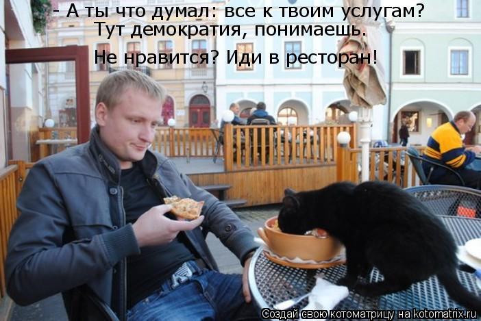 Котоматрица: Не нравится? Иди в ресторан! Тут демократия, понимаешь. - А ты что думал: все к твоим услугам?