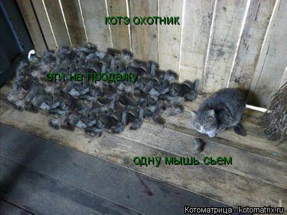 Котоматрица: котэ охотник одну мышь сьем эти на продажу