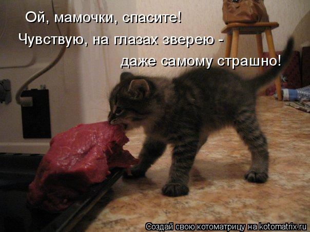 Котоматрица: Ой, мамочки, спасите! Чувствую, на глазах зверею -  даже самому страшно!