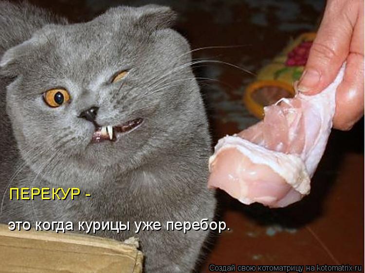 Котоматрица: ПЕРЕКУР -  это когда курицы уже перебор.