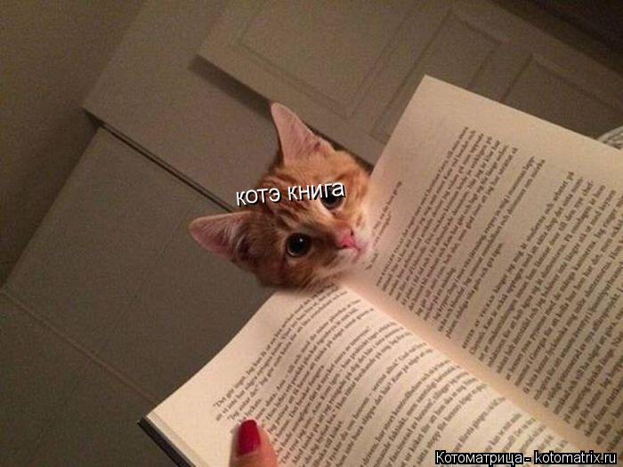 Котоматрица: котэ книга