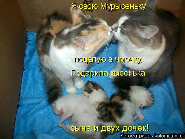 Котоматрица: Я свою Мурысеньку Подарила кысенька сына и двух дочек! поцелую в чмочку.