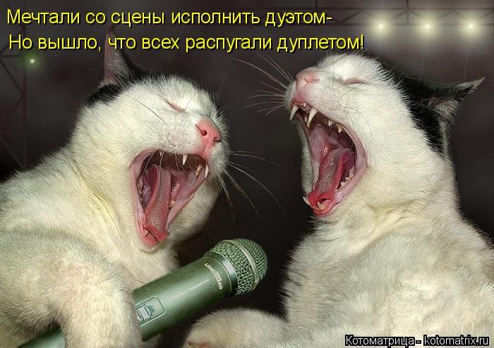 Котоматрица: Мечтали со сцены исполнить дуэтом-  Но вышло, что всех распугали дуплетом!