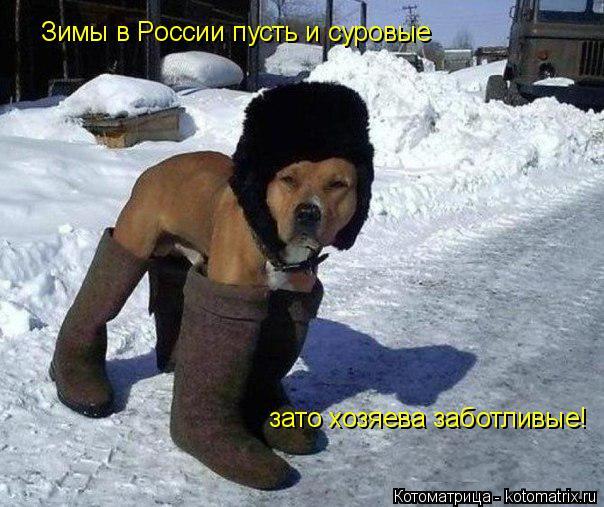 Котоматрица: Зимы в России пусть и суровые зато хозяева заботливые!