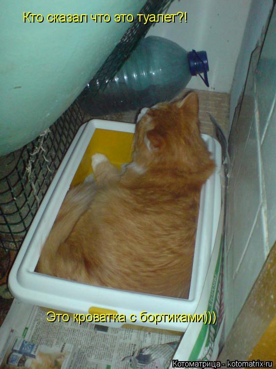 Котоматрица: Кто сказал что это туалет?! Это кроватка с бортиками)))