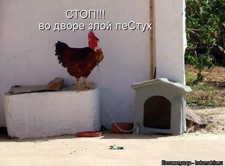 Котоматрица: СТОП!!! во дворе злой пеСтух