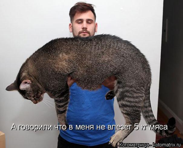 Котоматрица: А говорили что в меня не влезет 5 кг мяса