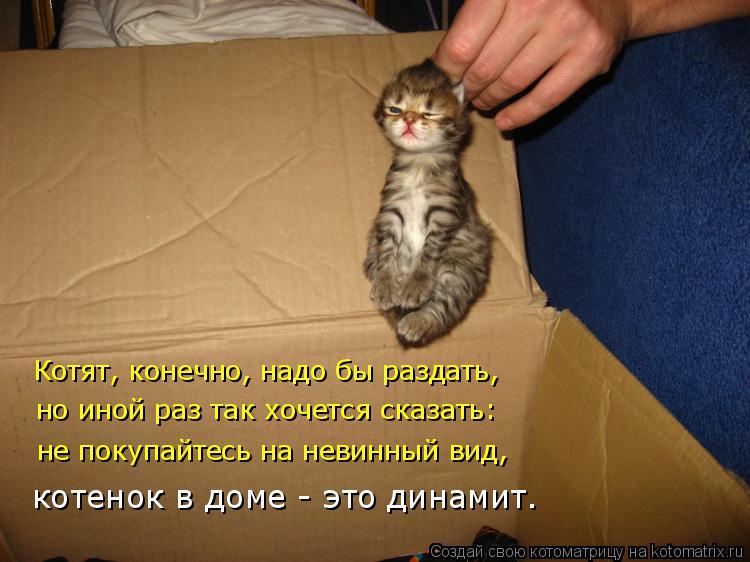 Котоматрица: Котят, конечно, надо бы раздать, но иной раз так хочется сказать:  не покупайтесь на невинный вид, котенок в доме - это динамит.