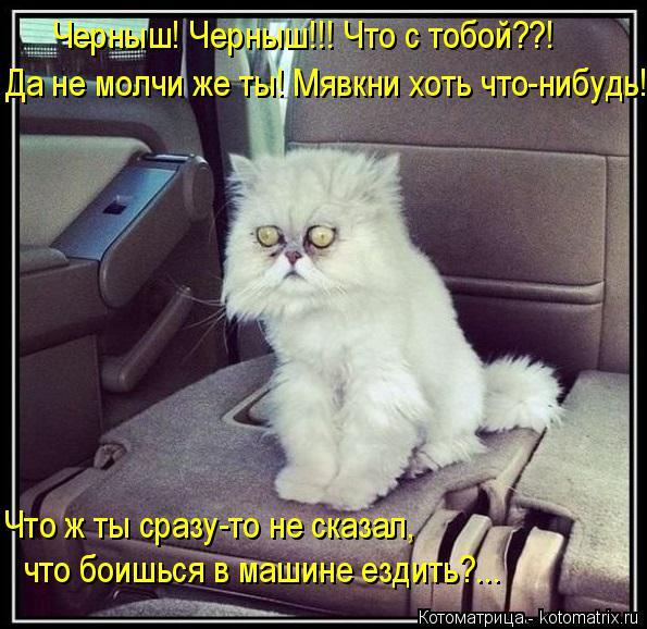 Котоматрица: Черныш! Черныш!!! Что с тобой??! Да не молчи же ты! Мявкни хоть что-нибудь! Что ж ты сразу-то не сказал, что боишься в машине ездить?...