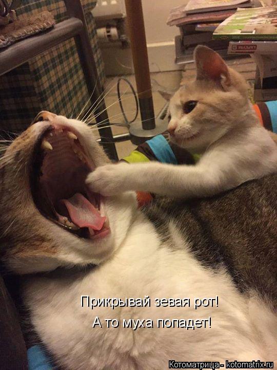 Котоматрица: Прикрывай зевая рот! А то муха попадет!