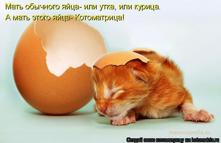 Котоматрица: Мать обычного яйца- или утка, или курица. А мать этого яйца- Котоматрица!