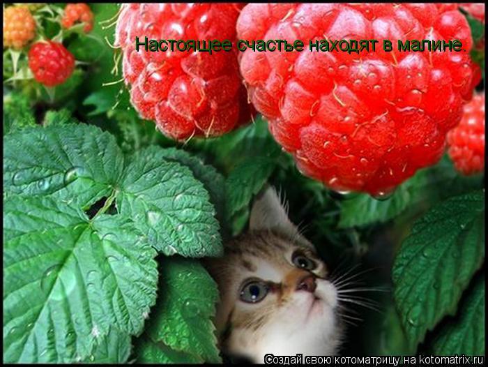 Котоматрица: Настоящее счастье находят в малине.