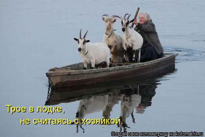Котоматрица: Трое в лодке,  не считаясь с хозяйкой.