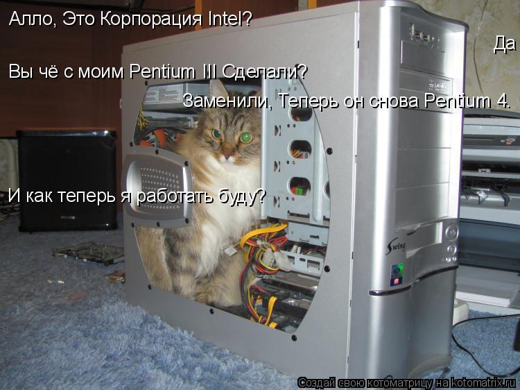 Котоматрица: Алло, Это Корпорация Intel? Да Вы чё с моим Pentium III Сделали? Заменили, Теперь он снова Pentium 4. И как теперь я работать буду?