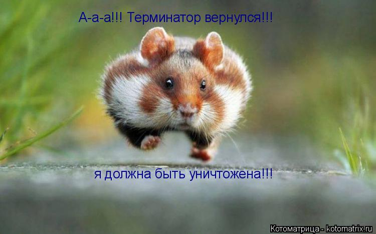 Котоматрица: А-а-а!!! Терминатор вернулся!!!  я должна быть уничтожена!!!