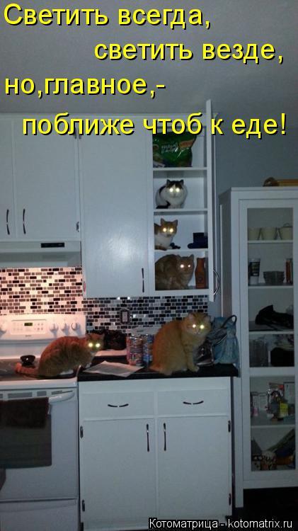 Котоматрица: Светить всегда, светить везде, но,главное,- поближе чтоб к еде!