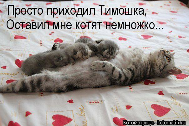 Котоматрица: Просто приходил Тимошка, Оставил мне котят немножко...