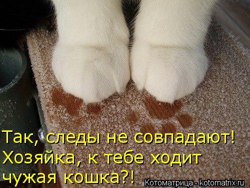 Котоматрица: чужая кошка?! Так, следы не совпадают! Хозяйка, к тебе ходит