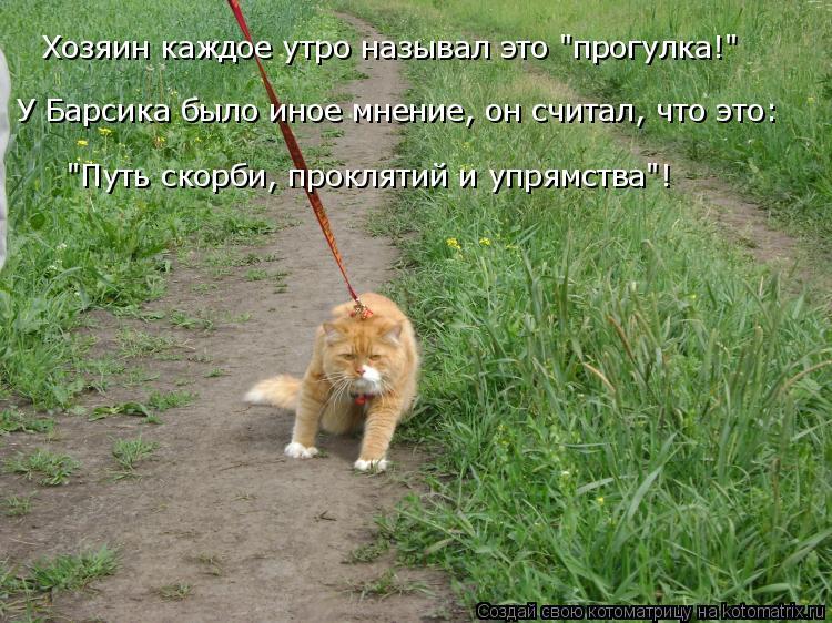 """Котоматрица: Хозяин каждое утро называл это """"прогулка!"""" У Барсика было иное мнение, он считал, что это: """"Путь скорби, проклятий и упрямства""""!"""