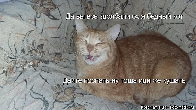 Котоматрица: Дайте поспать-ну тоша иди же кушать... Да вы все здолбали ох я бедный кот