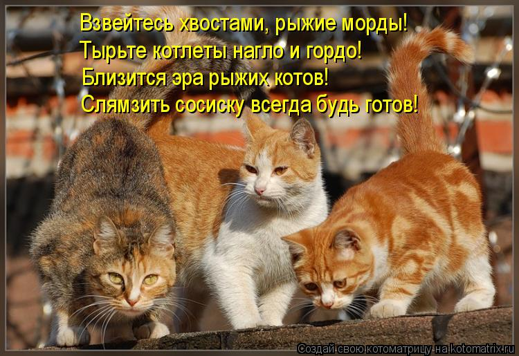 Котоматрица: Взвейтесь хвостами, рыжие морды! Тырьте котлеты нагло и гордо! Близится эра рыжих котов! Слямзить сосиску всегда будь готов!