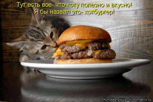 Котоматрица: Тут есть все- что коту полезно и вкусно! Я бы назвал это- котбургер!