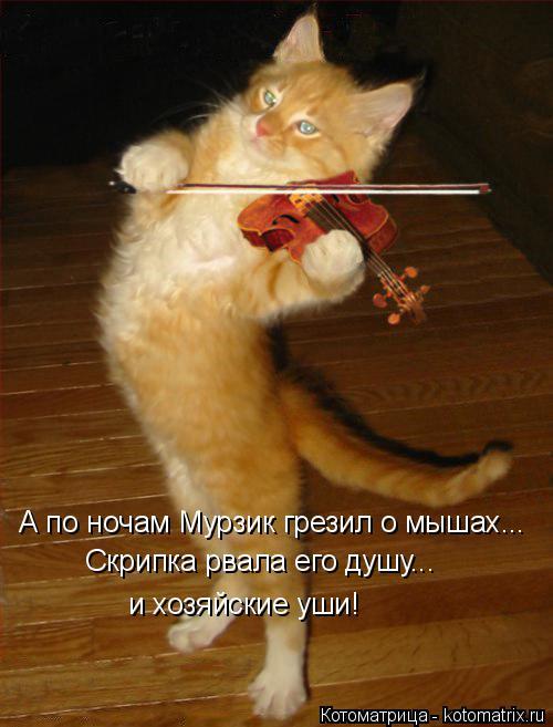 Котоматрица: А по ночам Мурзик грезил о мышах... Скрипка рвала его душу... и хозяйские уши!