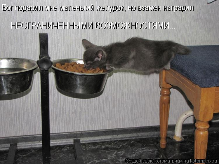 http://kotomatrix.ru/images/lolz/2015/11/21/kotomatritsa_qG.jpg
