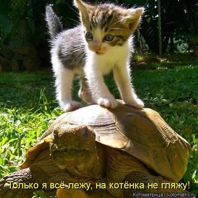 Котоматрица: Только я всё лежу, на котёнка не гляжу!