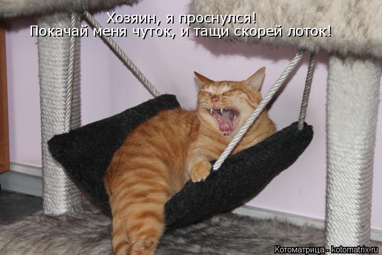 Котоматрица: Хозяин, я проснулся! Покачай меня,  пока хозяйка Покачай меня чуток, и тащи скорей лоток!