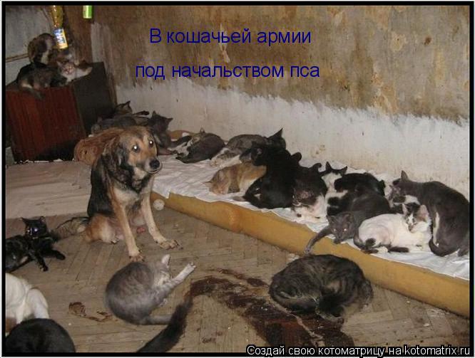 Котоматрица: В кошачьей армии под начальством пса