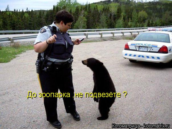 Котоматрица: До зоопарка ,не подвезёте ?