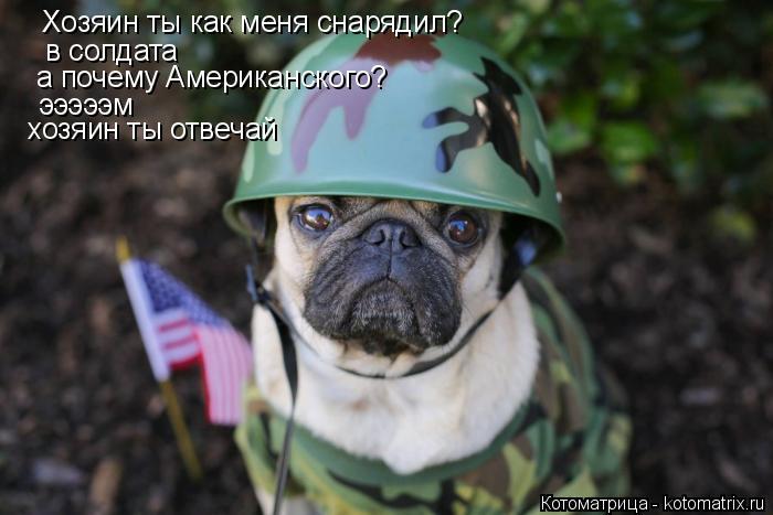 Котоматрица: Хозяин ты как меня снарядил? в солдата а почему Американского? эээээм хозяин ты отвечай