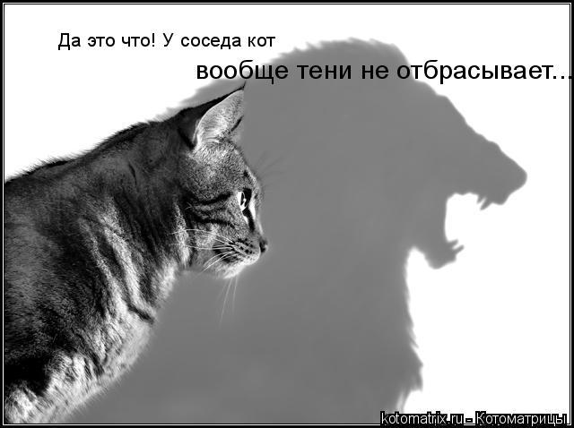 Котоматрица: Да это что! У соседа кот вообще тени не отбрасывает...