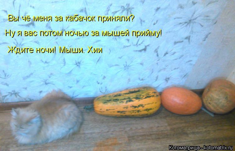 Котоматрица: Вы чё меня за кабачок приняли? Ну я вас потом ночью за мышей прийму! Ждите ночи! Мыши. Хии