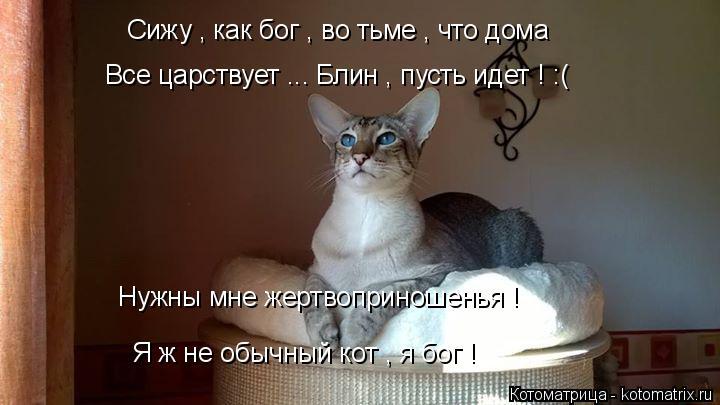 Котоматрица: Сижу , как бог , во тьме , что дома  Все царствует ... Блин , пусть идет ! :( Нужны мне жертвоприношенья ! Я ж не обычный кот , я бог !