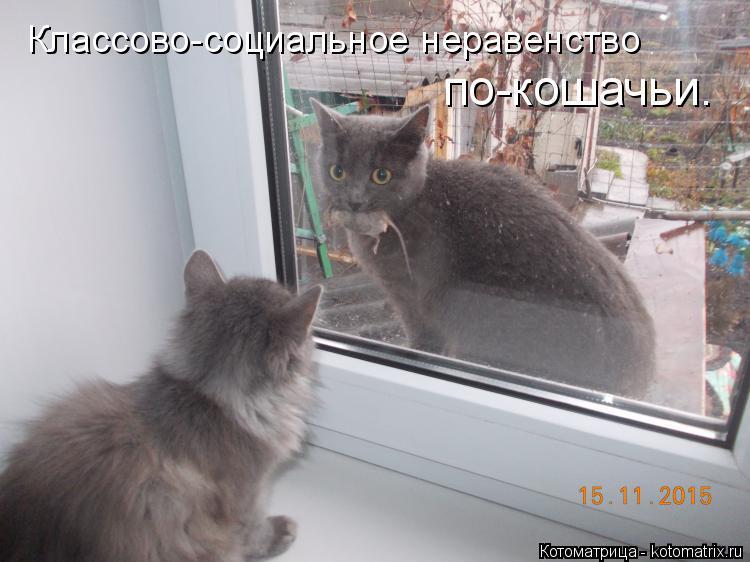 Котоматрица: Классово-социальное неравенство по-кошачьи.