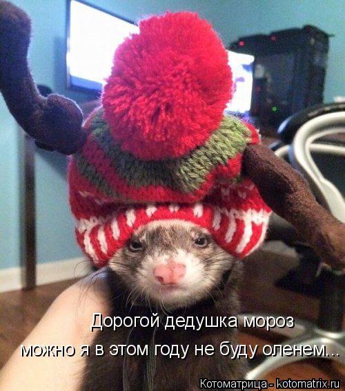 Котоматрица: Дорогой дедушка мороз можно я в этом году не буду оленем...