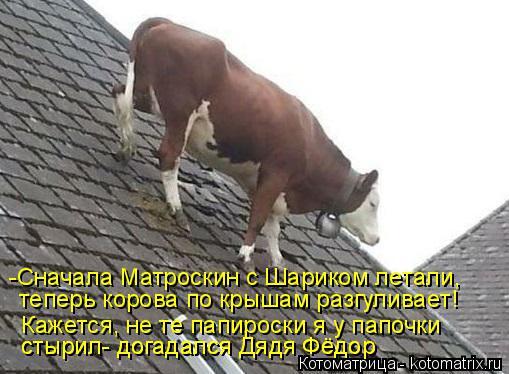 Котоматрица: теперь корова по крышам разгуливает! Кажется, не те папироски я у папочки  стырил- догадался Дядя Фёдор стырил- догадался Дядя Фёдор -Сначал