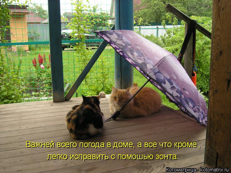 Котоматрица: Важней всего погода в доме, а все что кроме легко исправить с помошью зонта. ,