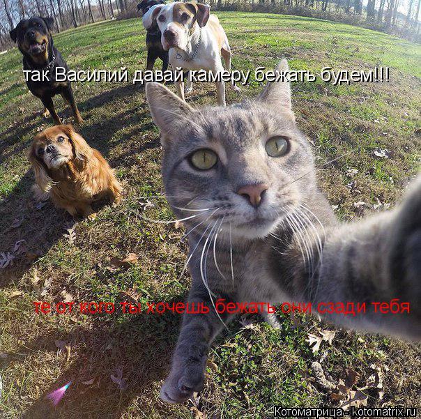 Котоматрица: так Василий давай камеру бежать будем!!! те от кого ты хочешь бежать они сзади тебя