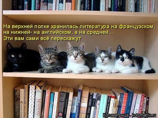 Котоматрица: На верхней полке хранилась литература на французском, на нижней- на английском, а на средней... Эти вам сами всё перескажут