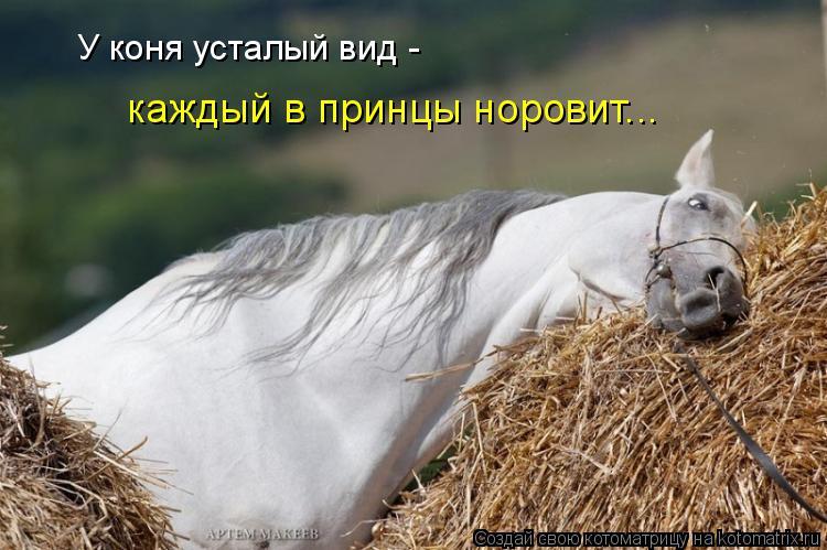 Котоматрица: У коня усталый вид - каждый в принцы норовит...