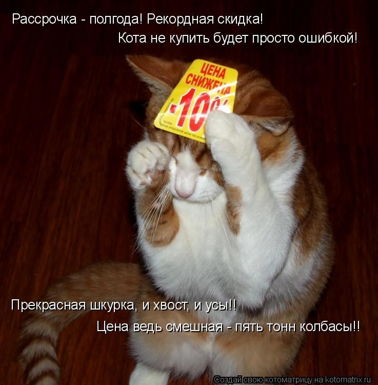 Котоматрица: Рассрочка - полгода! Рекордная скидка! Кота не купить будет просто ошибкой! Прекрасная шкурка, и хвост, и усы!! Цена ведь смешная - пять тонн к