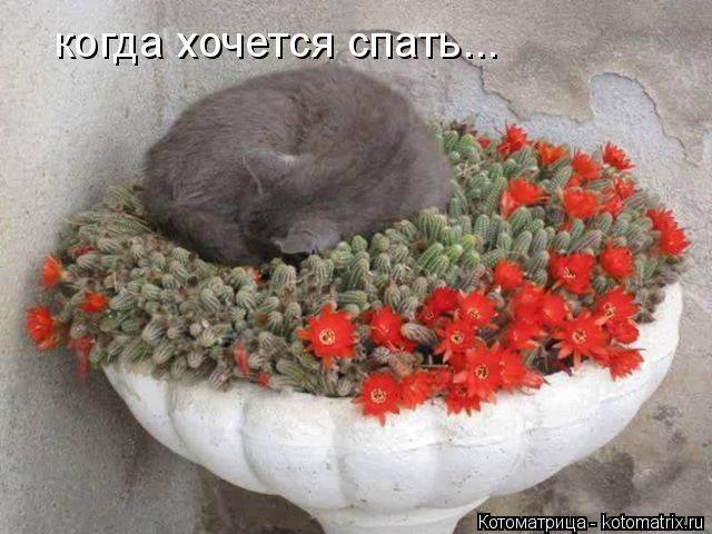 Котоматрица: когда хочется спать...