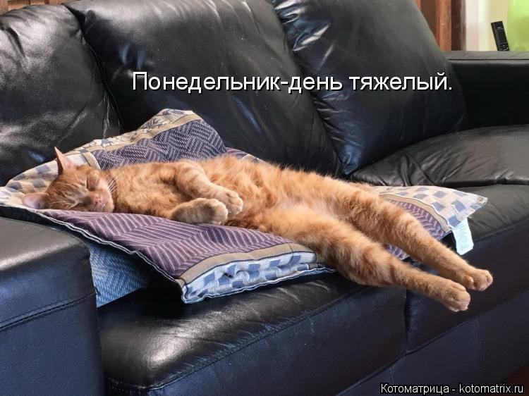 Котоматрица: Понедельник-день тяжелый.