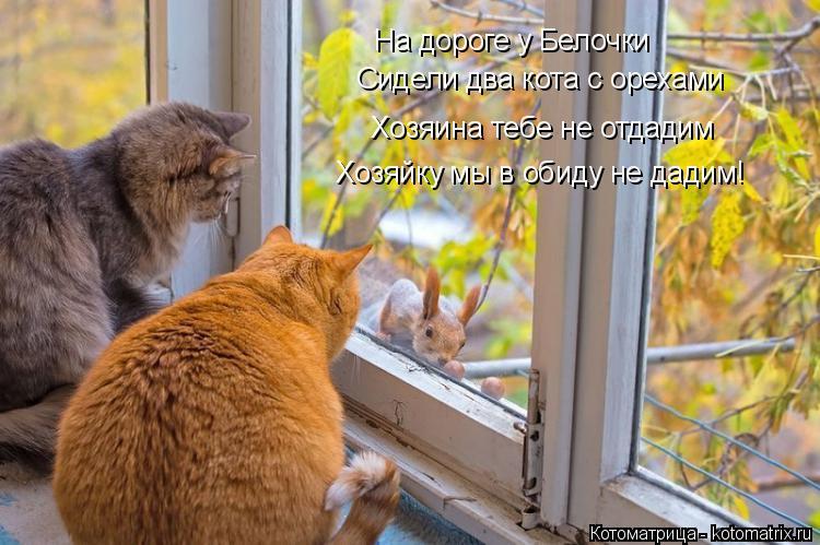 Котоматрица: На дороге у Белочки  Сидели два кота с орехами Хозяина тебе не отдадим Хозяйку мы в обиду не дадим!